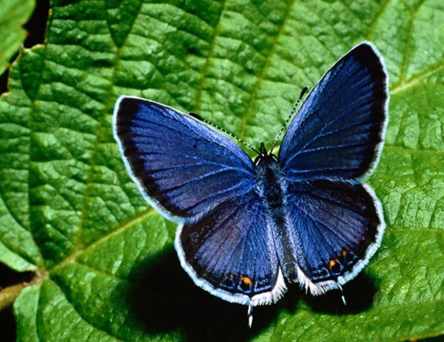 The Butterfly Engages in Trading